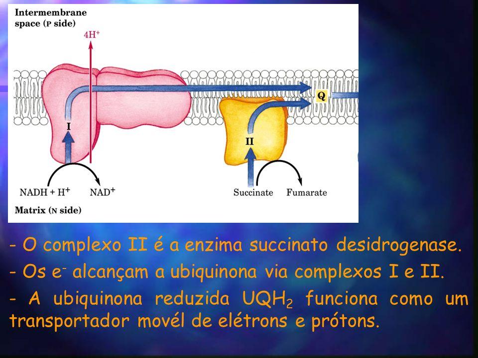 - O complexo II é a enzima succinato desidrogenase.