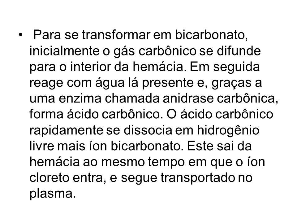 Para se transformar em bicarbonato, inicialmente o gás carbônico se difunde para o interior da hemácia. Em seguida reage com água lá presente e, graça