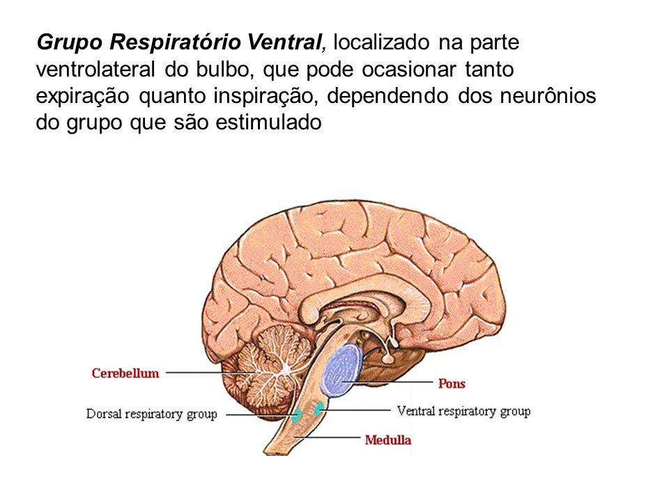 Grupo Respiratório Ventral, localizado na parte ventrolateral do bulbo, que pode ocasionar tanto expiração quanto inspiração, dependendo dos neurônios