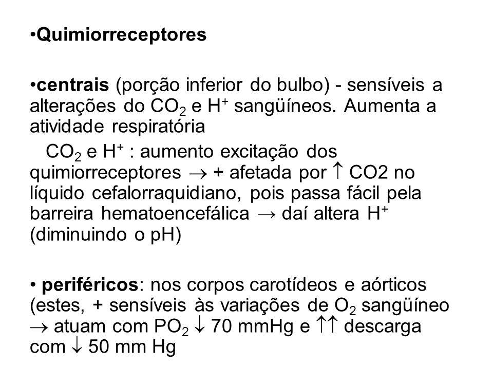 Quimiorreceptores centrais (porção inferior do bulbo) - sensíveis a alterações do CO 2 e H + sangüíneos. Aumenta a atividade respiratória CO 2 e H + :
