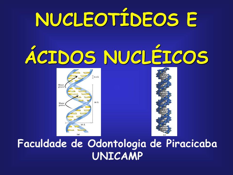 NUCLEOTÍDEOS E ÁCIDOS NUCLÉICOS Faculdade de Odontologia de Piracicaba UNICAMP