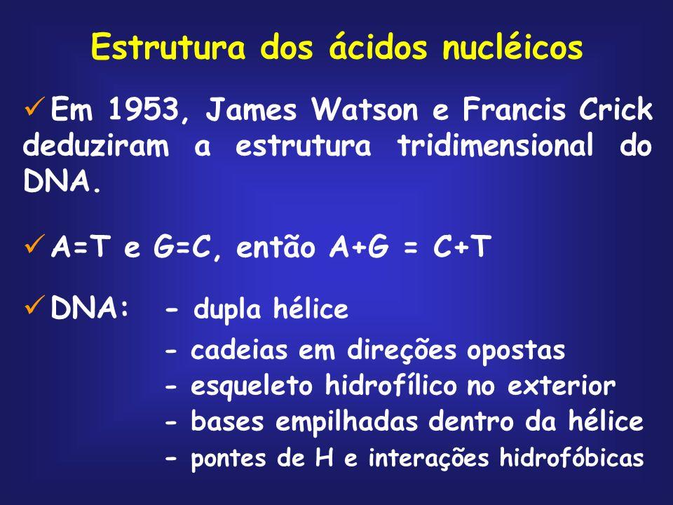 Estrutura dos ácidos nucléicos Em 1953, James Watson e Francis Crick deduziram a estrutura tridimensional do DNA. A=T e G=C, então A+G = C+T DNA:- dup