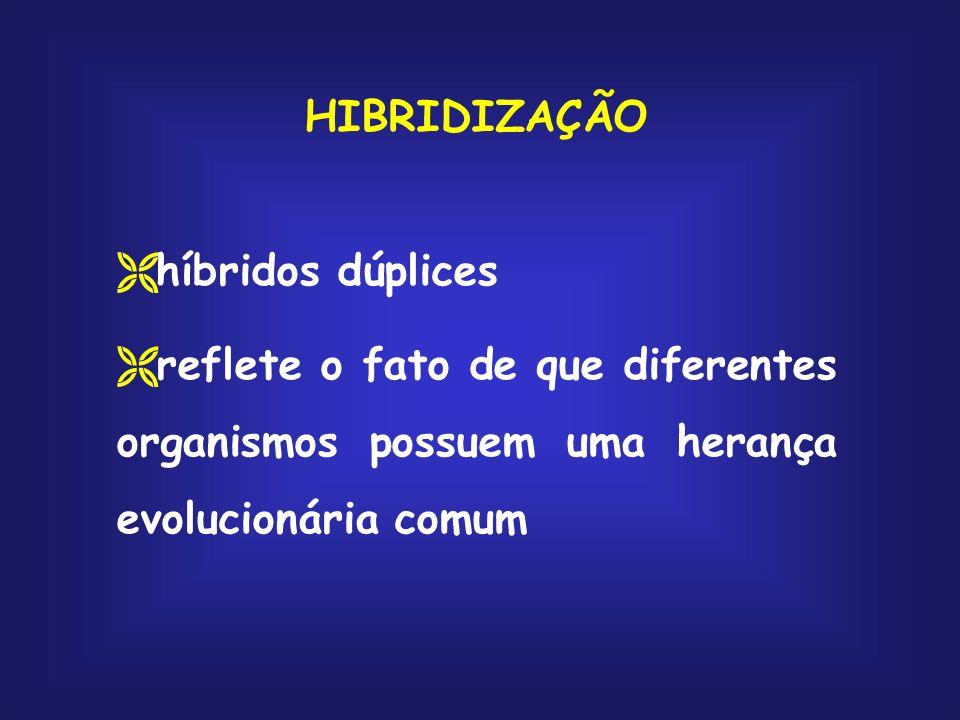 HIBRIDIZAÇÃO híbridos dúplices reflete o fato de que diferentes organismos possuem uma herança evolucionária comum