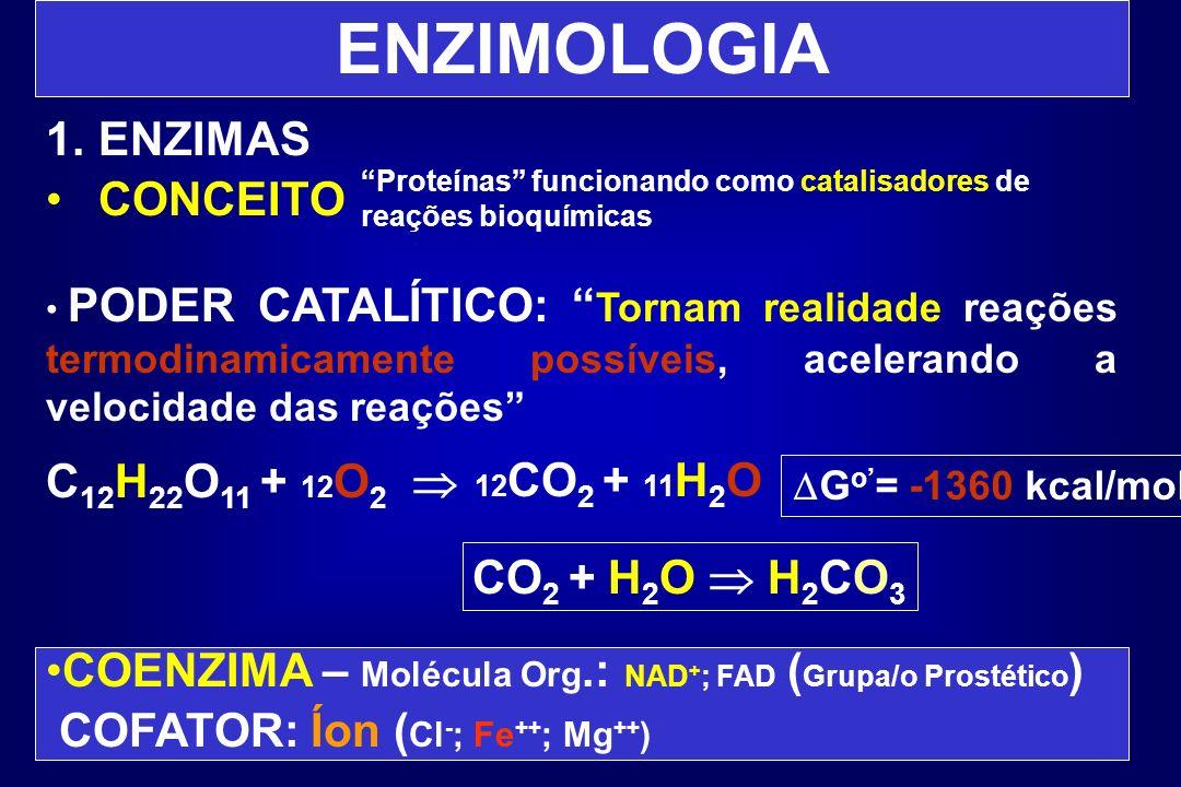 ENZIMOLOGIA 1.ENZIMAS CONCEITO PODER CATALÍTICO: Tornam realidade reações termodinamicamente possíveis, acelerando a velocidade das reações C 12 H 22