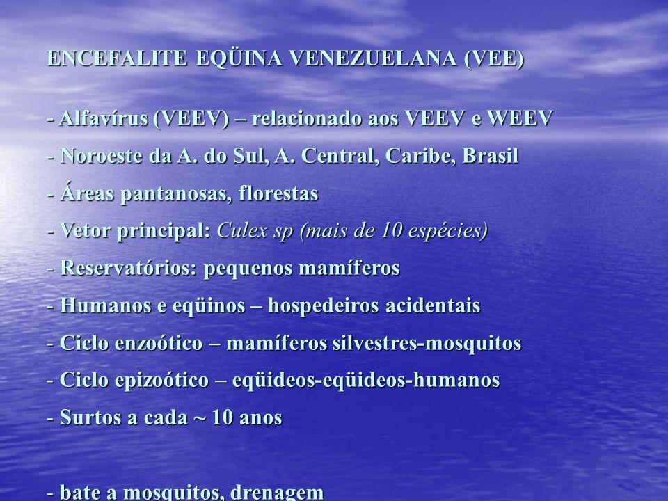 ENCEFALITE EQÜINA VENEZUELANA (VEE) - Alfavírus (VEEV) – relacionado aos VEEV e WEEV - Noroeste da A. do Sul, A. Central, Caribe, Brasil - Áreas panta