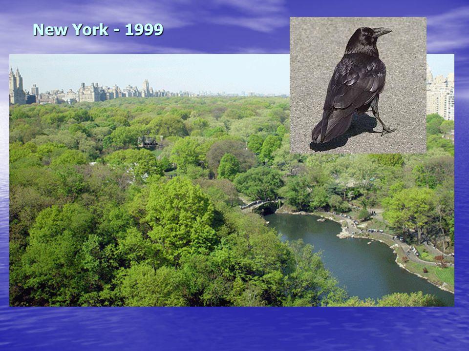 New York - 1999
