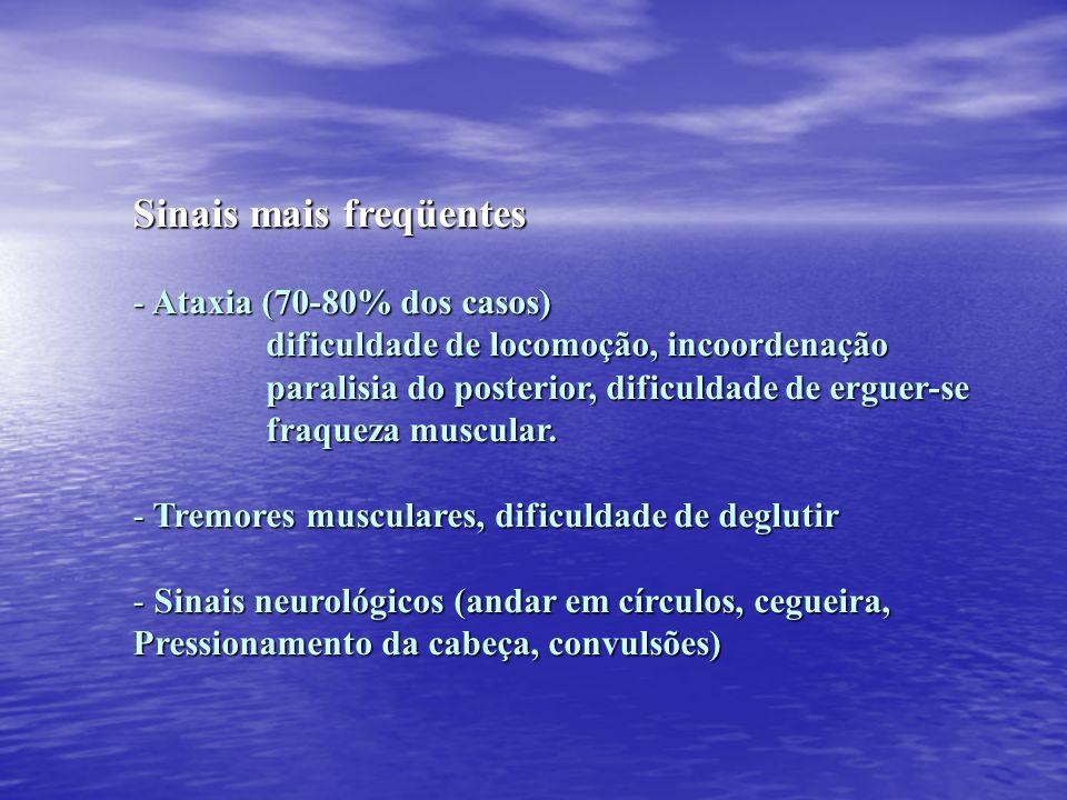Sinais mais freqüentes - Ataxia (70-80% dos casos) dificuldade de locomoção, incoordenação dificuldade de locomoção, incoordenação paralisia do poster