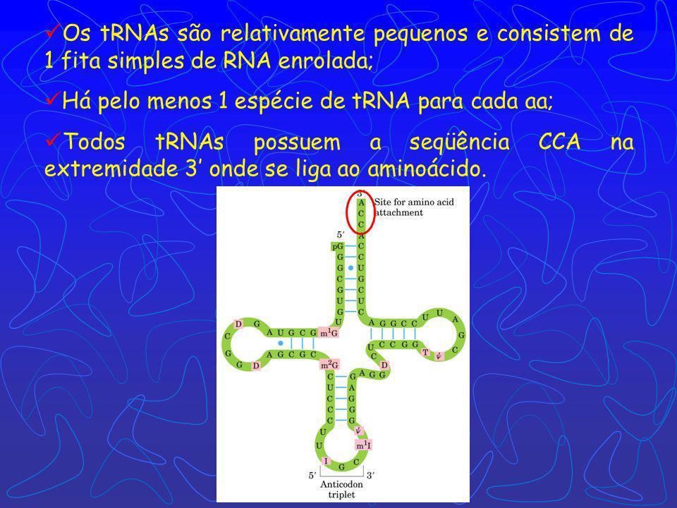 A síntese proteica é composta por 5 etapas: ativação dos aa, iniciação, alongamento, terminação/liberação e enrolamento/processamento.