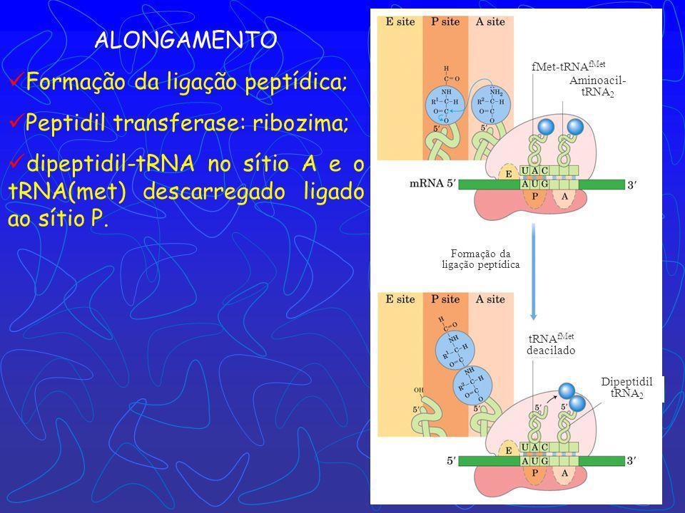 Complexo de iniciação (70S) próximo códon próximo aminoacil- tRNA Ligação do próximo aminoacil- tRNA ALONGAMENTO – ESTÁGIO 3 Ligações peptídicas são f