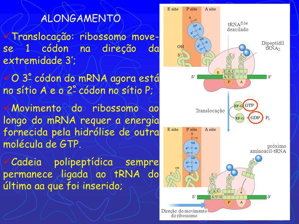Formação da ligação peptídica tRNA fMet deacilado Dipeptidil tRNA 2 fMet-tRNA fMet Aminoacil- tRNA 2 ALONGAMENTO Formação da ligação peptídica; Peptid