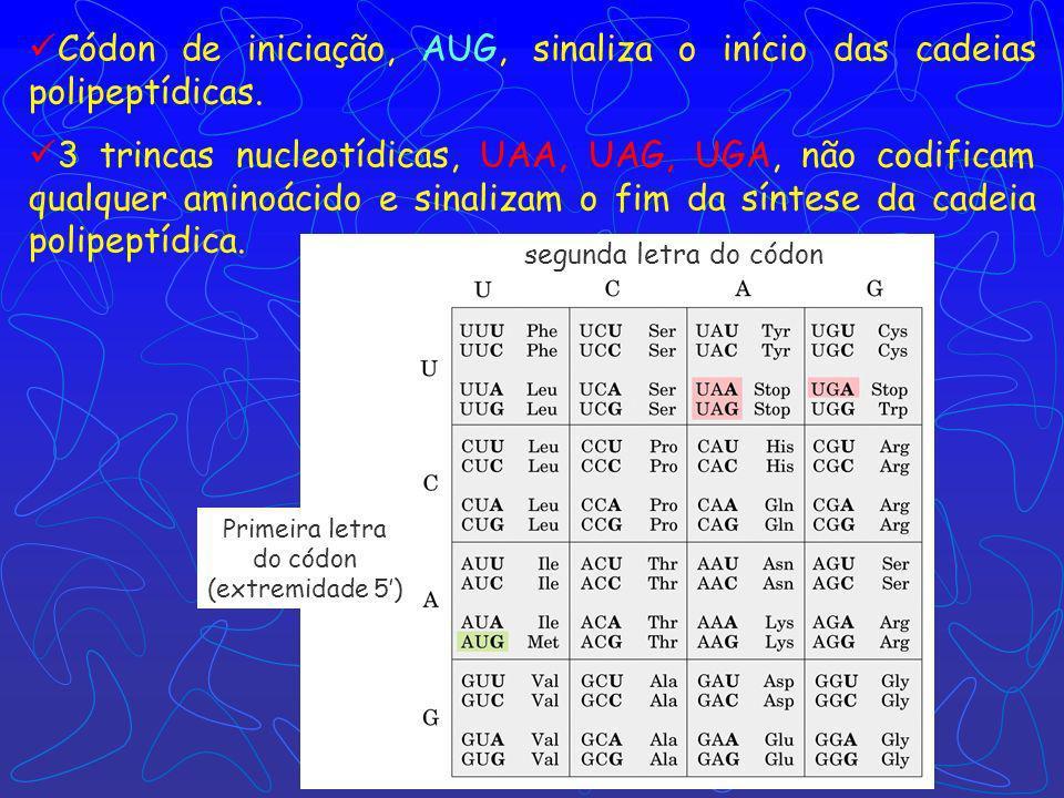 Códon de iniciação, AUG, sinaliza o início das cadeias polipeptídicas.