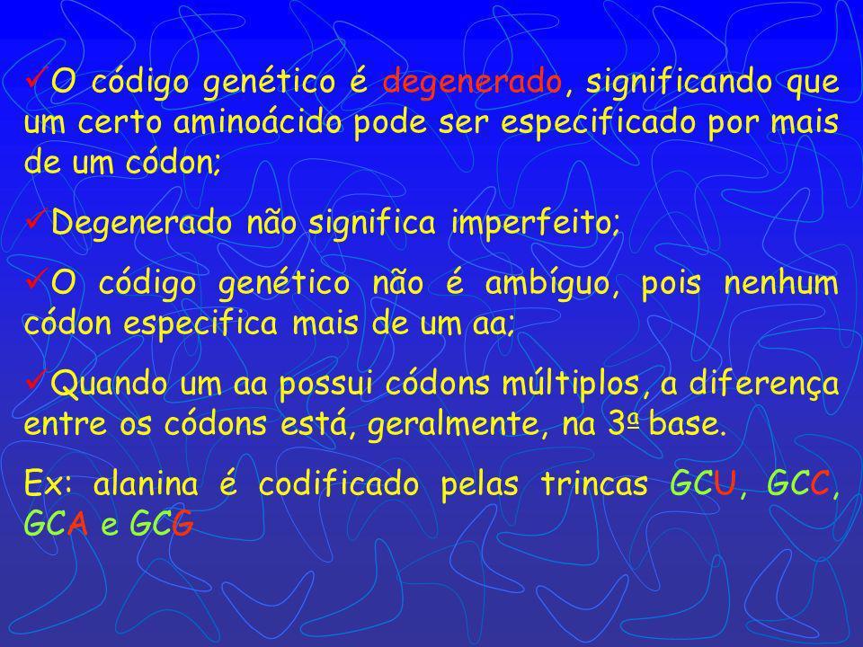 O código genético é degenerado, significando que um certo aminoácido pode ser especificado por mais de um códon; Degenerado não significa imperfeito; O código genético não é ambíguo, pois nenhum códon especifica mais de um aa; Quando um aa possui códons múltiplos, a diferença entre os códons está, geralmente, na 3 a base.
