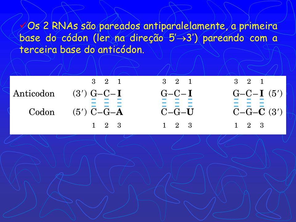 tRNA funciona como um adaptador, reconhece uma seqüência nucleotídica curta no mRNA. Uma trinca nucleotídica específica no tRNA interage com uma trinc