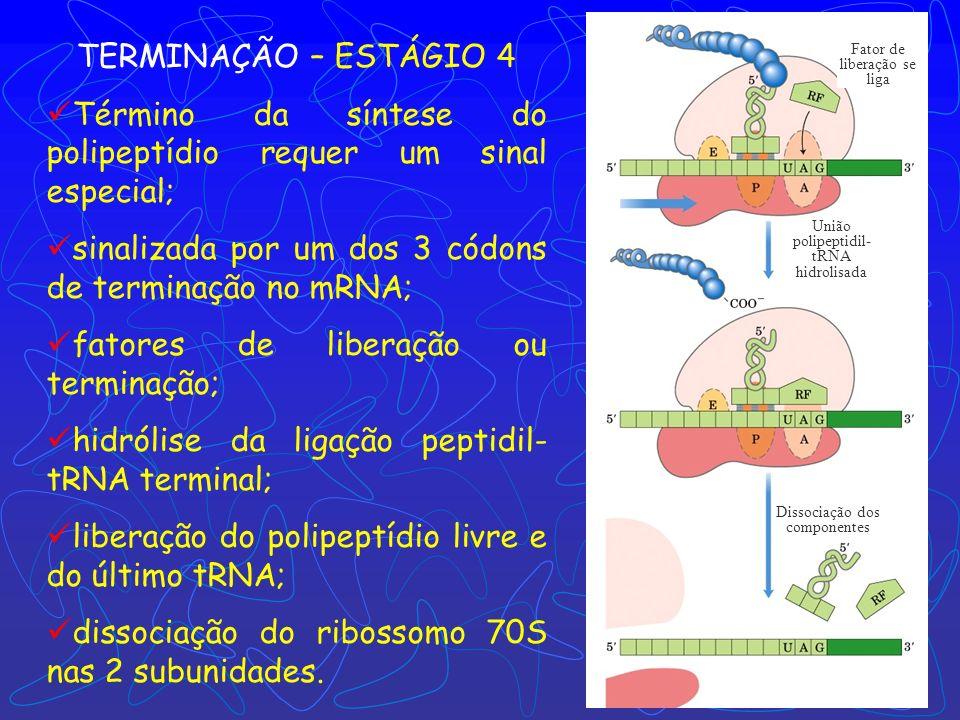 tRNA fMet deacilado Dipeptidil tRNA 2 Translocação próximo aminoacil-tRNA Direção do movimento do ribossomo ALONGAMENTO Translocação: ribossomo move-