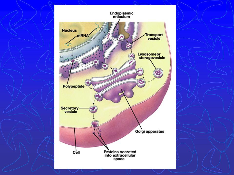 A estreptomicina em baixas concentrações leva a erro de leitura e em altas concentrações inibe a iniciação da síntese protéica.