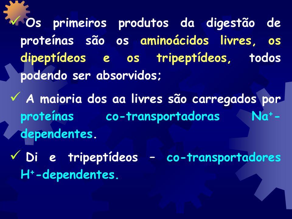 Os primeiros produtos da digestão de proteínas são os aminoácidos livres, os dipeptídeos e os tripeptídeos, todos podendo ser absorvidos; A maioria dos aa livres são carregados por proteínas co-transportadoras Na + - dependentes.
