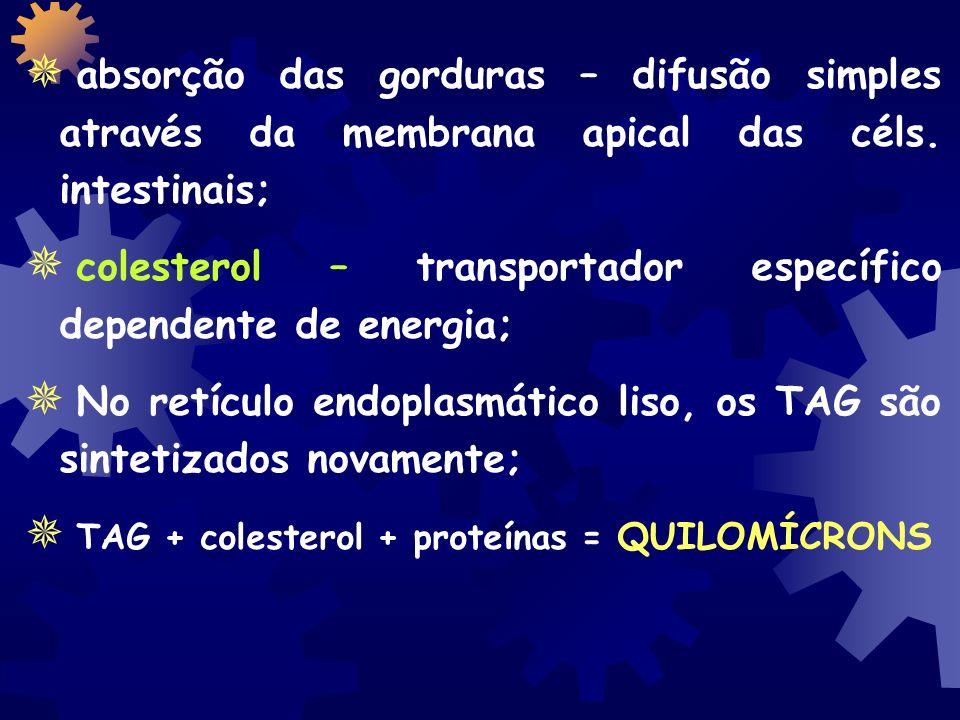 absorção das gorduras – difusão simples através da membrana apical das céls.