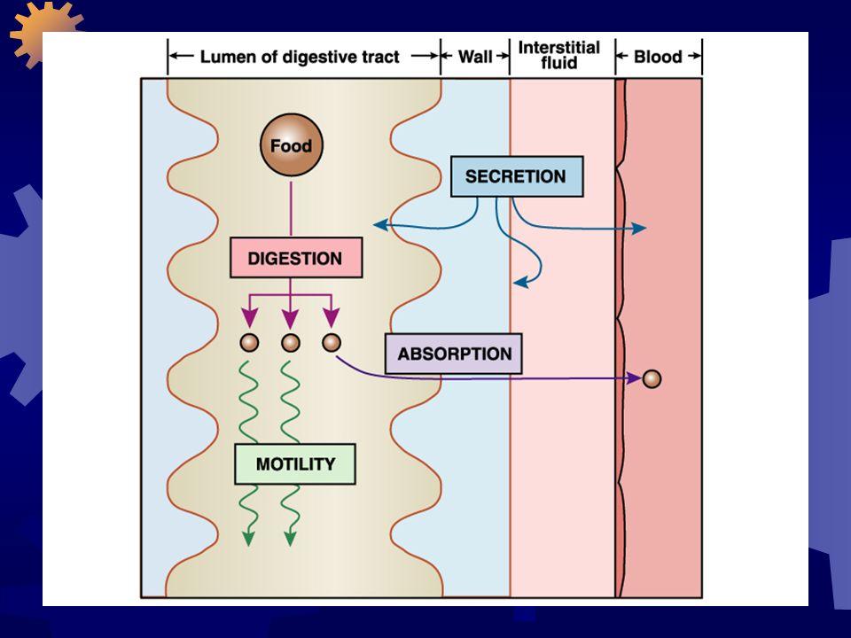Quando os nutrientes chegam até as células, o metabolismo celular determina seu uso ou armazenamento.