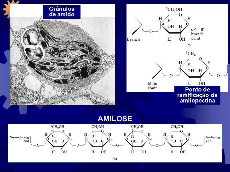 Grânulos de glicogênio O glicogênio é usualmente degradado durante seu cozimento.