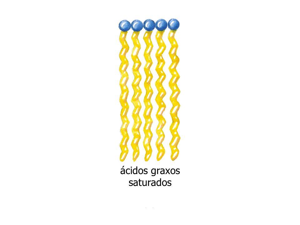 http://bio.winona.msus.edu/berg/ANIMTNS/Recep.htm Carboxila terminal Amino terminal Superfície interna Superfície externa A cadeia polipeptídica única da bacteriorrodopsina dobra-se em 7 -hélices hidrofóbicas, cada uma atravessando a bicamada lipídica.