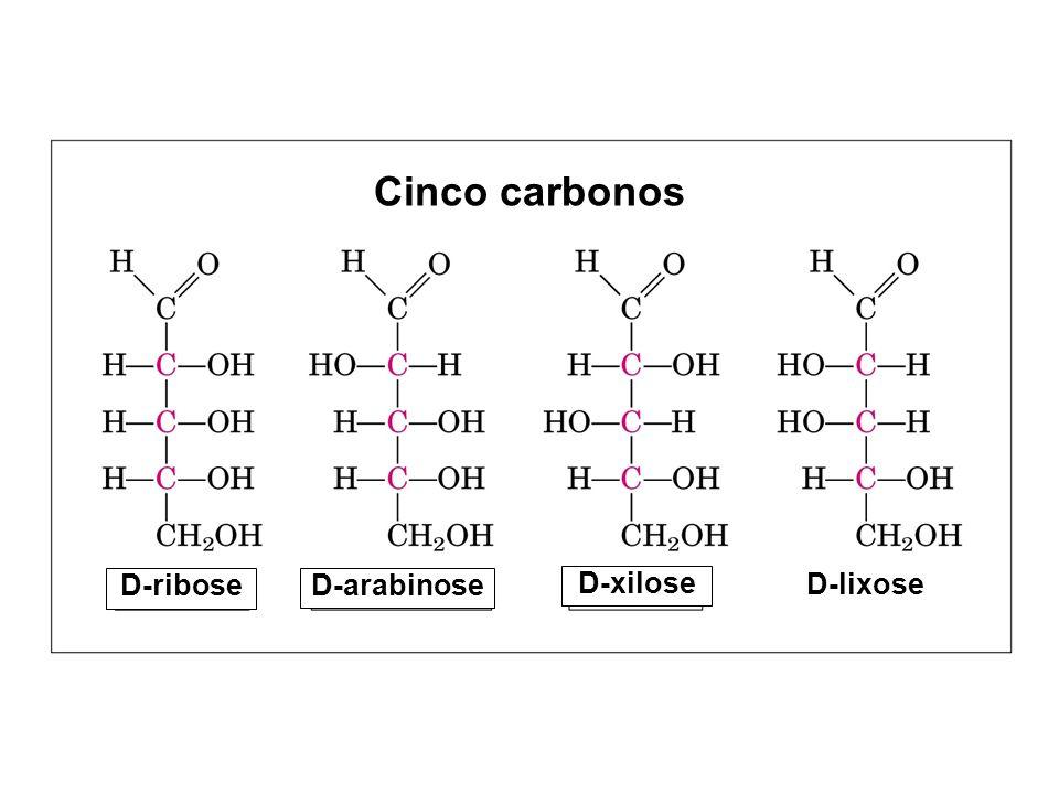 D-ribose Cinco carbonos D-lixose D-arabinose D-xilose