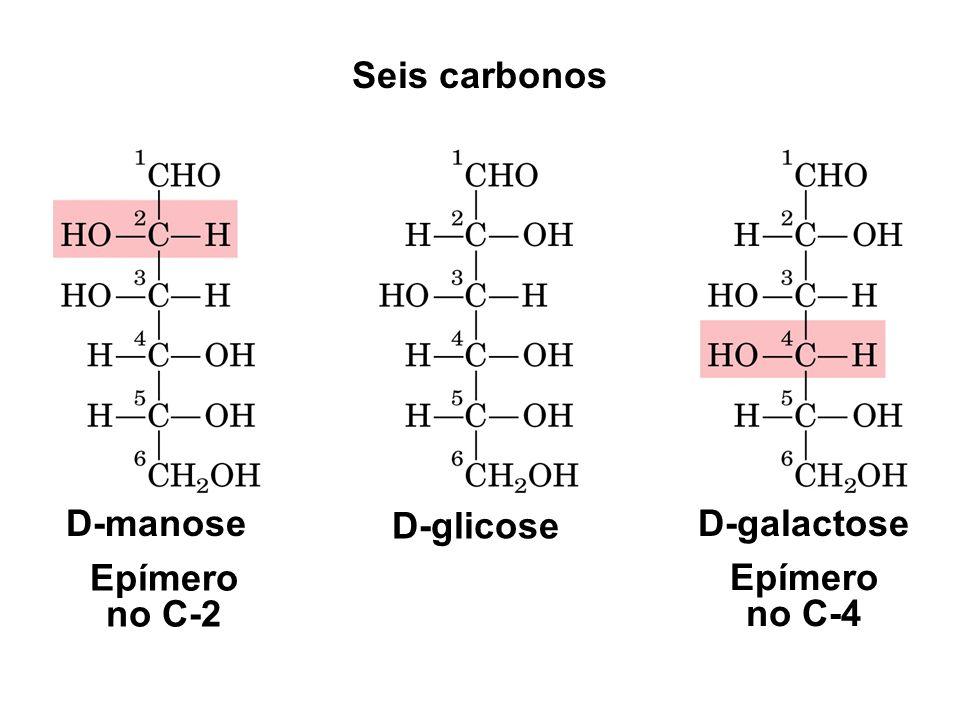 D-manose D-glicose D-galactose Epímero no C-2 Epímero no C-4 Seis carbonos