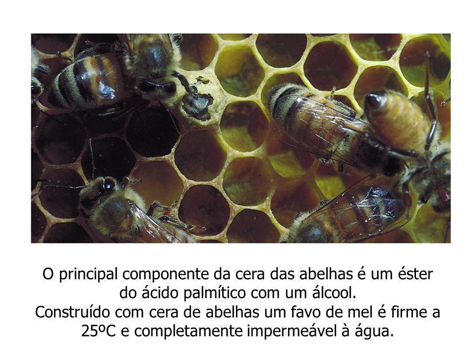 O principal componente da cera das abelhas é um éster do ácido palmítico com um álcool. Construído com cera de abelhas um favo de mel é firme a 25ºC e