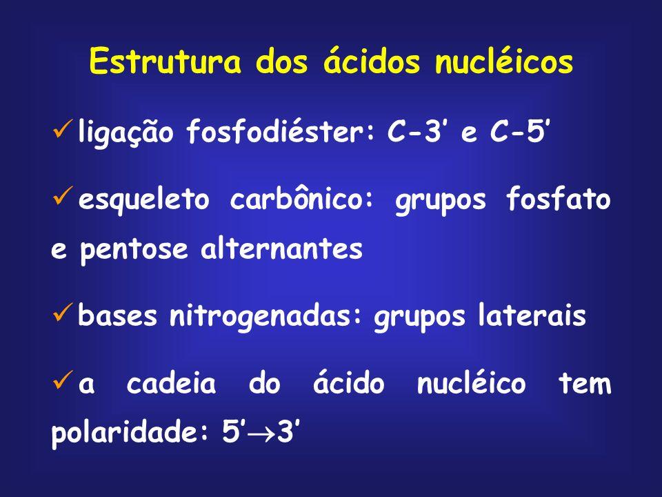 Estrutura dos ácidos nucléicos ligação fosfodiéster: C-3 e C-5 esqueleto carbônico: grupos fosfato e pentose alternantes bases nitrogenadas: grupos la