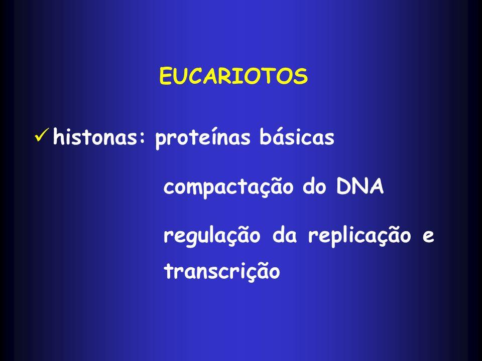 EUCARIOTOS histonas: proteínas básicas compactação do DNA regulação da replicação e transcrição