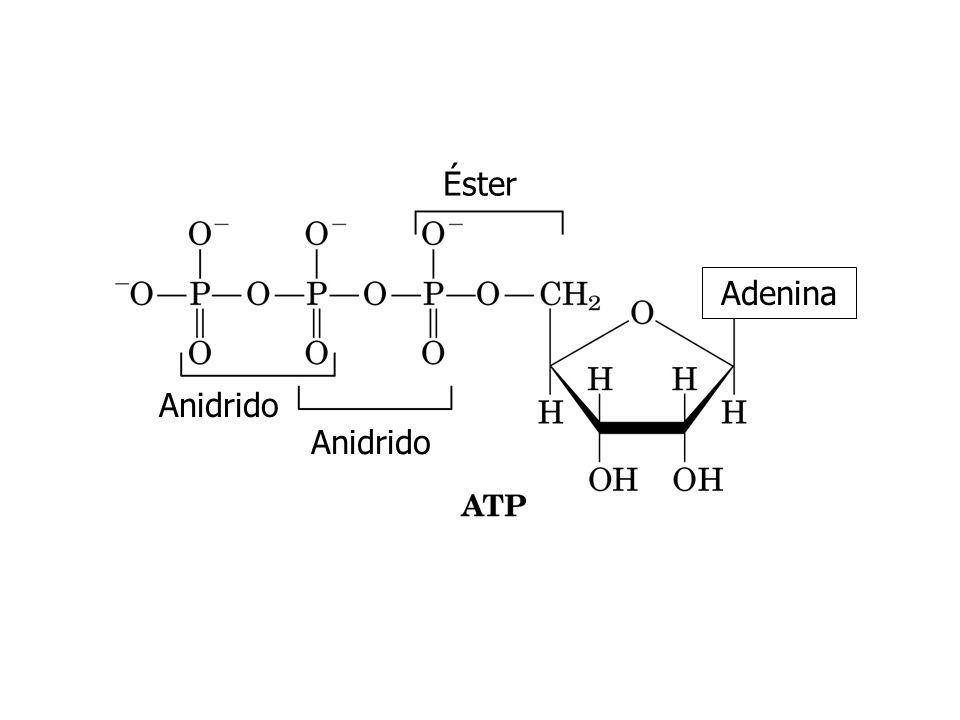 Anidrido Éster Adenina