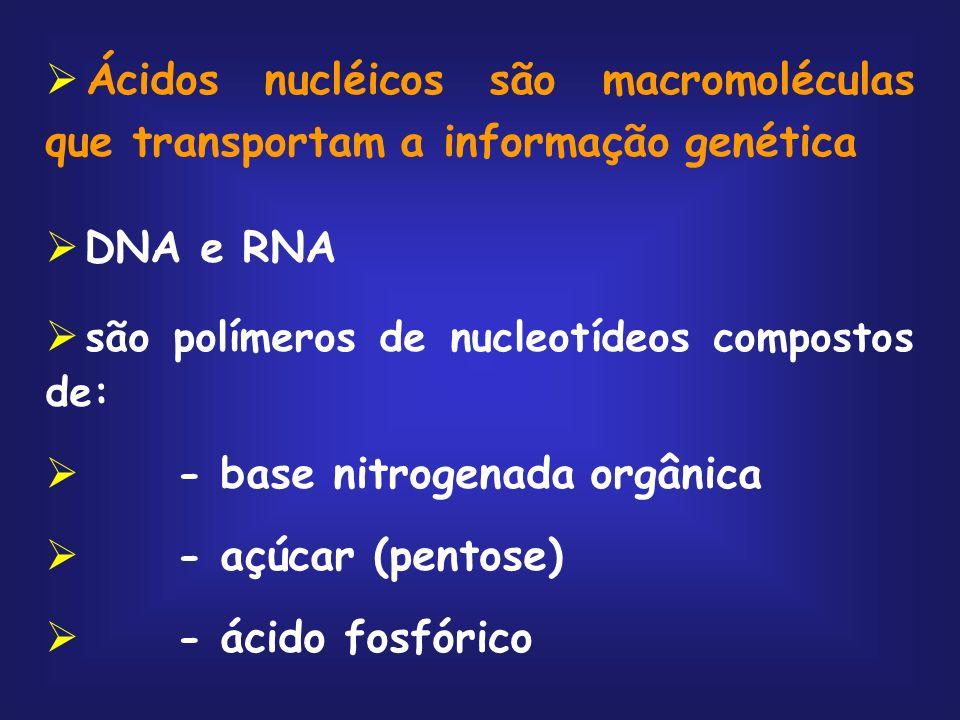 Ácidos nucléicos são macromoléculas que transportam a informação genética DNA e RNA são polímeros de nucleotídeos compostos de: - base nitrogenada org