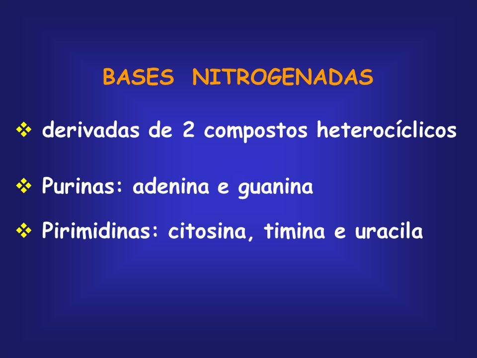 BASES NITROGENADAS derivadas de 2 compostos heterocíclicos Purinas: adenina e guanina Pirimidinas: citosina, timina e uracila