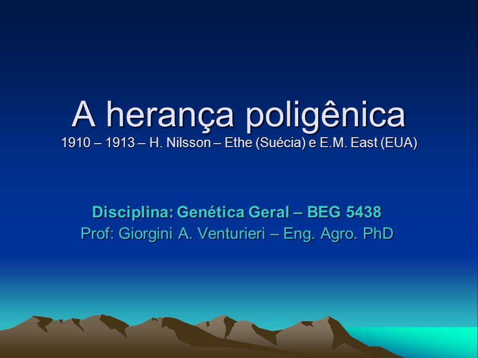 A herança poligênica 1910 – 1913 – H. Nilsson – Ethe (Suécia) e E.M. East (EUA) Disciplina: Genética Geral – BEG 5438 Prof: Giorgini A. Venturieri – E