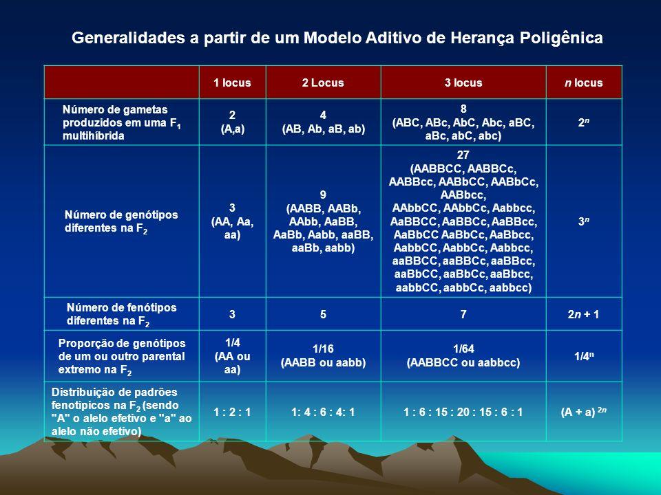 1 locus2 Locus3 locusn locus Número de gametas produzidos em uma F 1 multihíbrida 2 (A,a) 4 (AB, Ab, aB, ab) 8 (ABC, ABc, AbC, Abc, aBC, aBc, abC, abc
