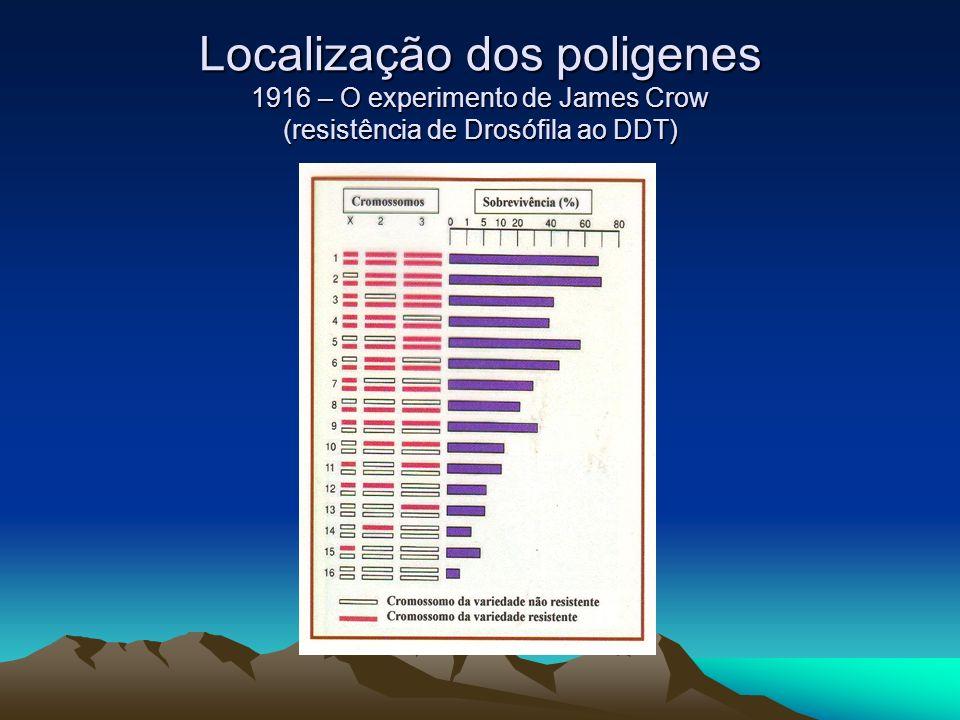 Localização dos poligenes 1916 – O experimento de James Crow (resistência de Drosófila ao DDT)