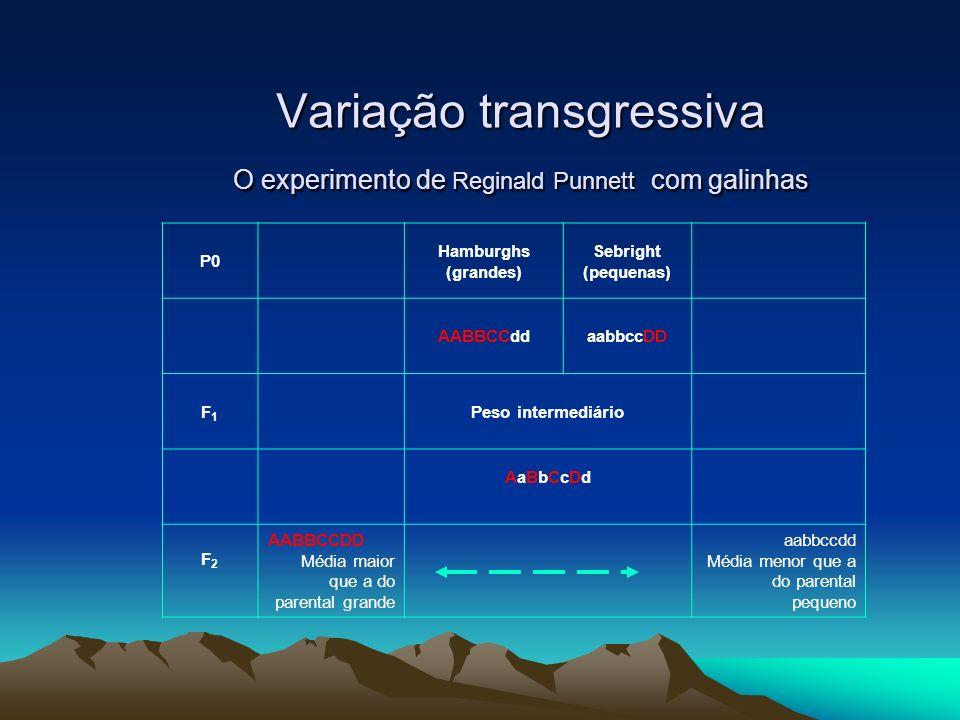 Variação transgressiva O experimento de Reginald Punnett com galinhas P0 Hamburghs (grandes) Sebright (pequenas) AABBCCddaabbccDD F1F1 Peso intermediá