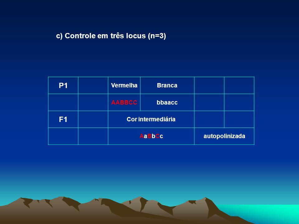 P1 VermelhaBranca AABBCCbbaacc F1 Cor intermediária AaBbCcAaBbCcautopolinizada c) Controle em três locus (n=3)