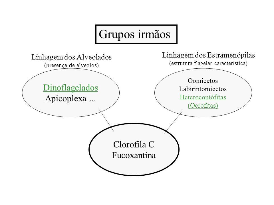 Caracterísiticas Básicas - Eucarióticas - Clorofila a, c1 e c2 - Xantofilas (principalmente fucoxantina) -Carotenos (principalmente beta-caroteno) - Reserva = Laminarina e manitol -Parede celular = celulose, ác.