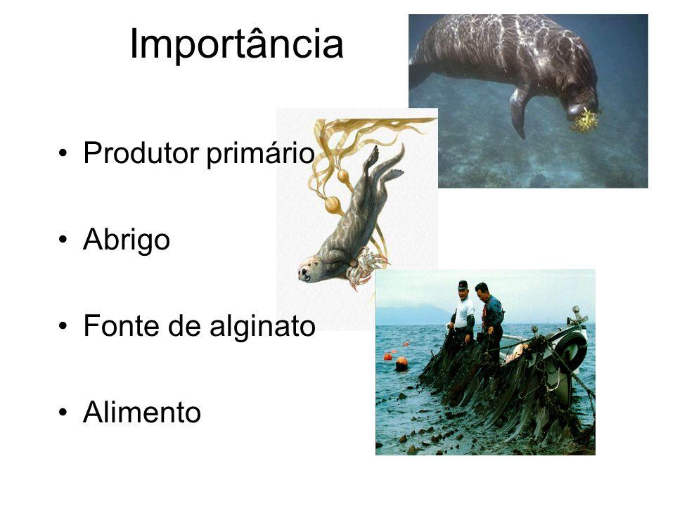 Ecklonia sp