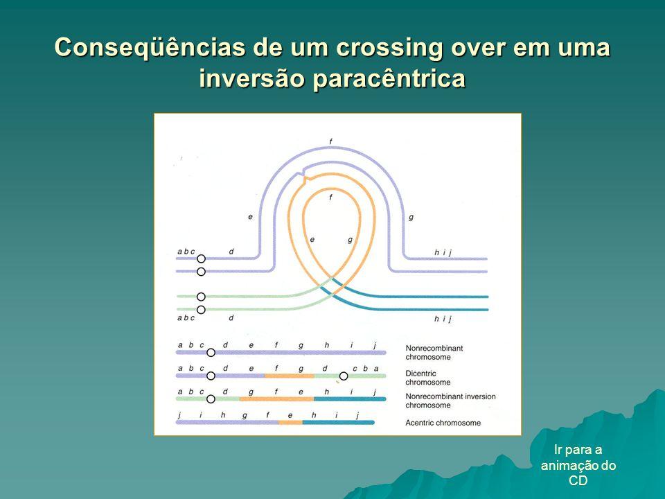 Conseqüências de um crossing over em uma inversão paracêntrica Ir para a animação do CD