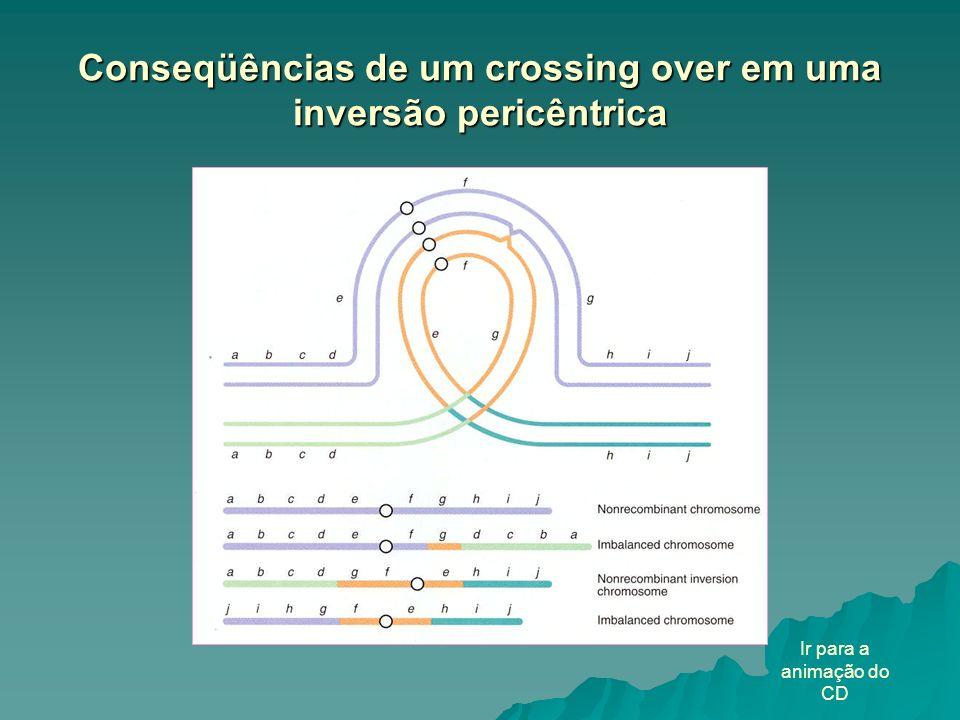 Conseqüências de um crossing over em uma inversão pericêntrica Ir para a animação do CD