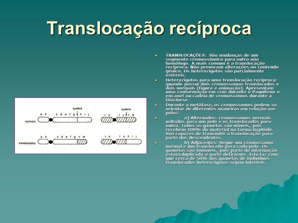 Translocação recíproca TRANSLOCAÇÕES: São mudanças de um segmento cromossômico para outro não homólogo. A mais comum é a translocação recíproca. Não p