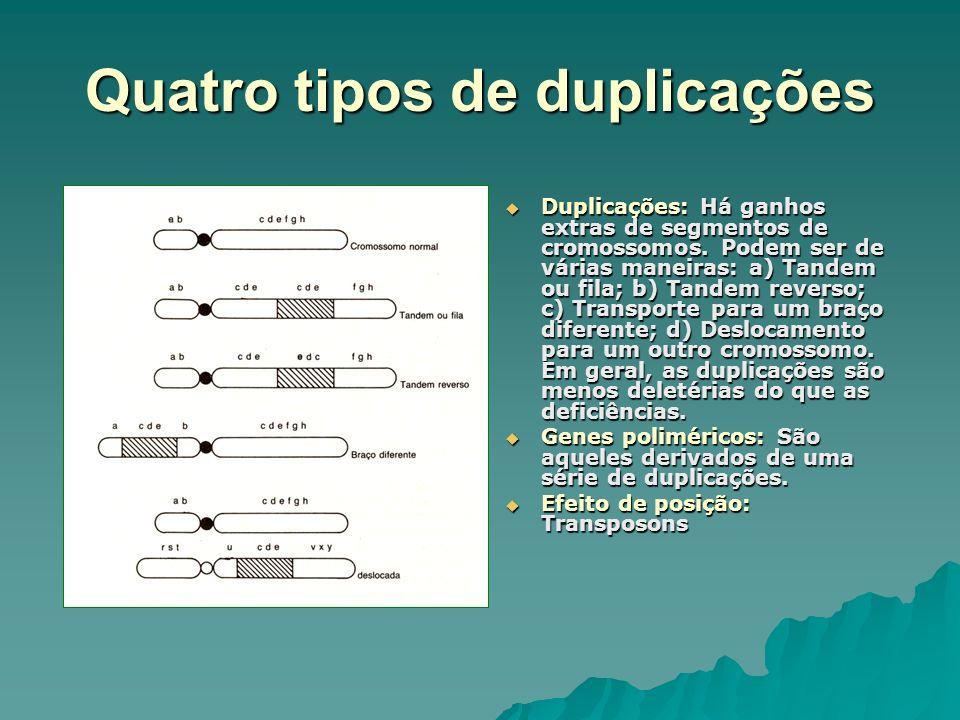 Quatro tipos de duplicações Duplicações: Há ganhos extras de segmentos de cromossomos. Podem ser de várias maneiras: a) Tandem ou fila; b) Tandem reve