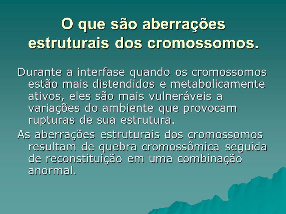 O que são aberrações estruturais dos cromossomos. Durante a interfase quando os cromossomos estão mais distendidos e metabolicamente ativos, eles são
