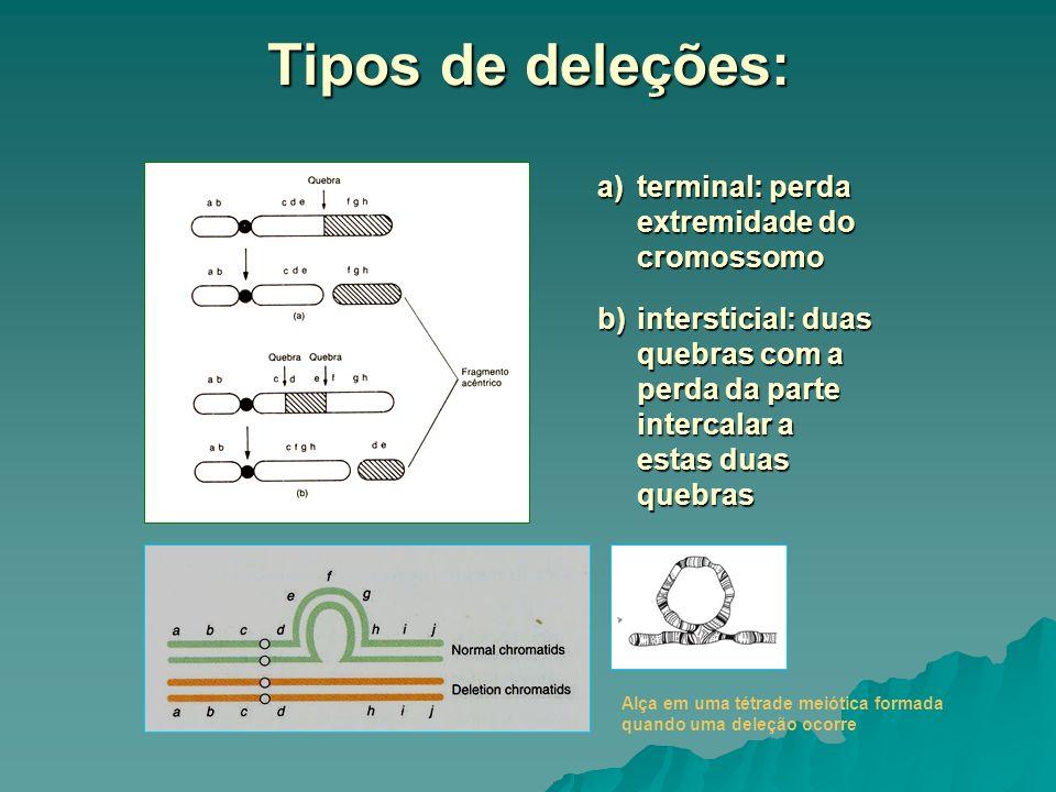 Cromossomos em anel As deleções terminais nos dois braços de um cromossomo podem dar origem a um cromossomo em anel, se as extremidades livres fraturadas se soldarem.