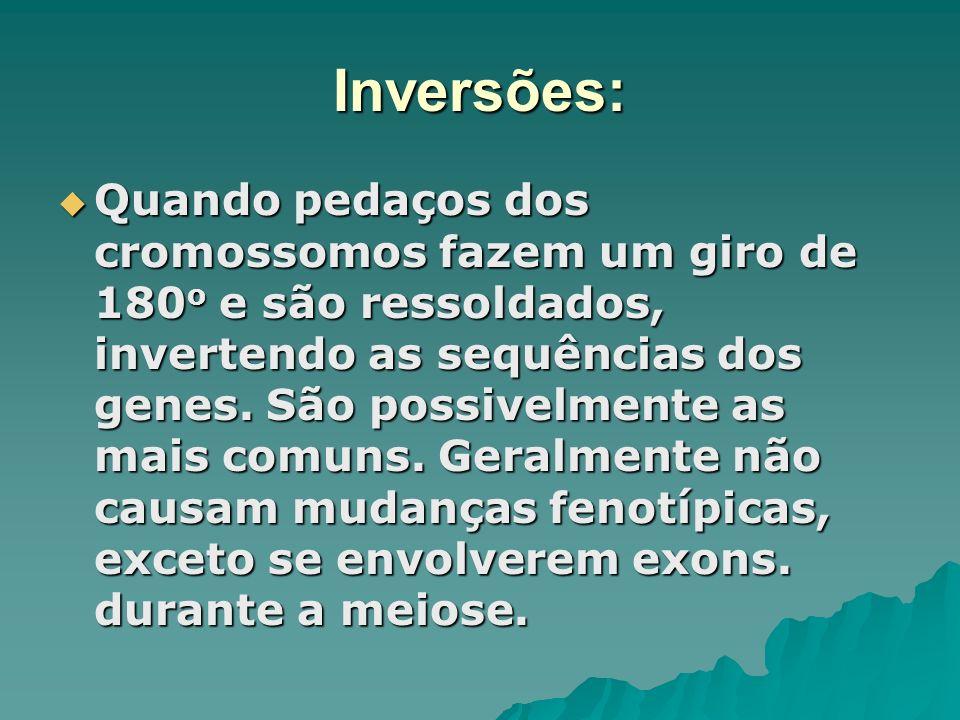 Inversões: Quando pedaços dos cromossomos fazem um giro de 180 o e são ressoldados, invertendo as sequências dos genes. São possivelmente as mais comu