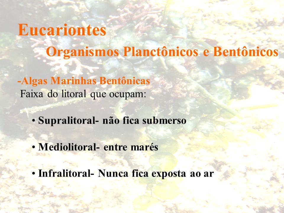 Eucariontes Organismos Planctônicos e Bentônicos -Algas Marinhas Bentônicas Faixa do litoral que ocupam: Supralitoral- não fica submerso Mediolitoral-