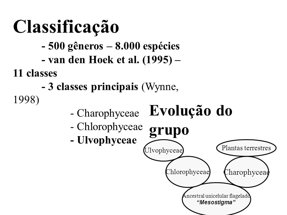 Classificação - 500 gêneros – 8.000 espécies - van den Hoek et al. (1995) – 11 classes - 3 classes principais (Wynne, 1998) - Charophyceae - Chlorophy