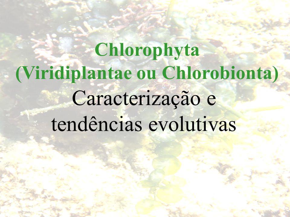 Caracterísiticas Básicas - Eucarióticas - Clorofila a e b - Xantofilas (principalmente luteína) - Carotenos (principalmente beta-caroteno) - Reserva = Amido - Parede celular = principalmente celulose - Presença de flagelos em alguma fase do ciclo de vida