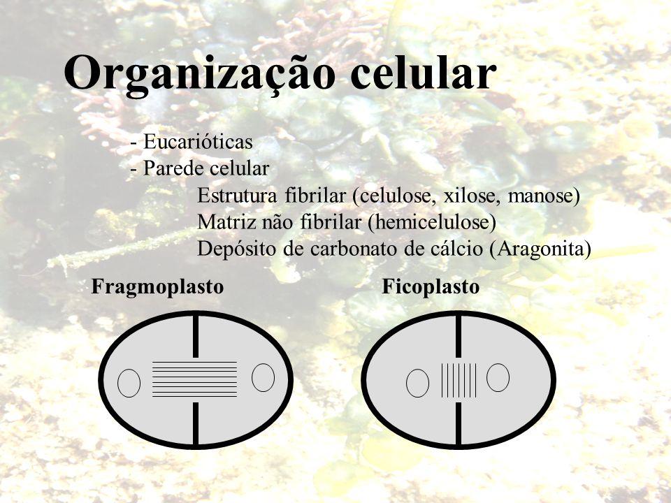 Cloroplasto - 1 - MUITOS POR CÉLULA - Forma variável (critério taxonômico) - fita - estrelado - laminar - discóide - reticulado, etc … - Pigmentos plantas vasculares e briófitas Luteinas, xantofilas e beta-caroteno - Reserva - Amido - Pirenóides